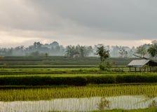 Giacimento a terrazze del riso in Bali con il cielo nuvoloso Fotografia Stock