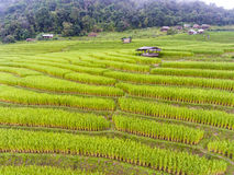 Giacimento a terrazze del riso in collina Fotografia Stock Libera da Diritti