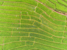 Giacimento a terrazze del riso in collina Fotografie Stock Libere da Diritti