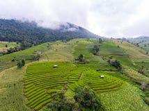 Giacimento a terrazze del riso in collina, aerea Fotografia Stock Libera da Diritti