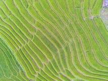 Giacimento a terrazze del riso in collina, cima Immagine Stock Libera da Diritti