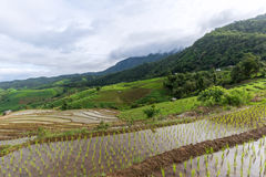 Giacimento a terrazze del riso con il fondo della montagna e della capanna, Chiang Mai in Tailandia, fondo della sfuocatura Immagine Stock Libera da Diritti