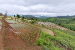 Giacimento a terrazze del riso con il fondo della montagna e della capanna, Chiang Mai in Tailandia, fondo della sfuocatura Immagini Stock Libere da Diritti