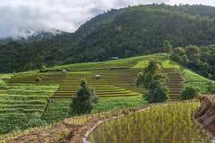 Giacimento a terrazze del riso con il fondo della montagna e della capanna, Chiang Mai in Tailandia, fondo della sfuocatura Fotografia Stock