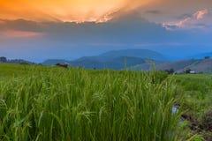 Giacimento a terrazze del riso con il fondo della montagna e della capanna, Chiang Mai in Tailandia, fondo della sfuocatura Immagine Stock