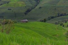 Giacimento a terrazze del riso con il fondo della montagna e della capanna, Chiang Mai in Tailandia, fondo della sfuocatura Immagini Stock