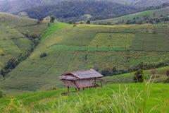 Giacimento a terrazze del riso con il fondo della montagna e della capanna, Chiang Mai in Tailandia, fondo della sfuocatura Fotografia Stock Libera da Diritti