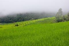 Giacimento a terrazze del riso con il fondo della montagna e della capanna, Chiang Mai in Tailandia, fondo della sfuocatura Fotografie Stock Libere da Diritti