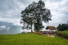 Giacimento a terrazze del riso con il grande paesaggio dell'albero di Y Ty, distretto di Xat del pipistrello, Lao Cai, vietnam de Fotografie Stock Libere da Diritti