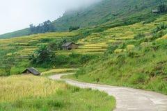 Giacimento a terrazze del riso con il paesaggio curvo della strada nella raccolta della stagione in Y Ty, distretto di Xat del pi Immagini Stock