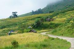 Giacimento a terrazze del riso con il paesaggio curvo della strada nella raccolta della stagione in Y Ty, distretto di Xat del pi Fotografia Stock