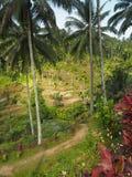 Giacimento a terrazze del riso di stordimento con le palme, fiori tropicali in Bali, Indonesia fotografie stock libere da diritti