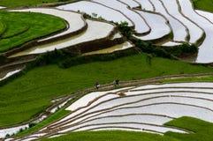 Giacimento a terrazze del riso in MU Cang Chai, Vietnam Fotografia Stock Libera da Diritti