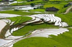 Giacimento a terrazze del riso in MU Cang Chai, Vietnam Immagine Stock Libera da Diritti