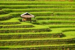 Giacimento a terrazze del riso in MU Cang Chai, Vietnam fotografie stock libere da diritti