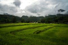 Giacimento a terrazze del riso nel giorno nuvoloso a Mae Klang Luang in Chiang Mai, Tailandia fotografia stock