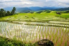 Giacimento a terrazze del riso nel PA Pong Pieng Chiang Mai, Tailandia Fotografia Stock