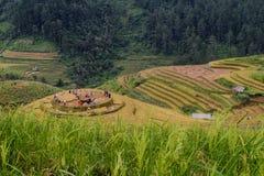 Giacimento a terrazze del riso nel Vietnam del Nord Immagini Stock