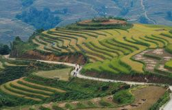 Giacimento a terrazze del riso nel Vietnam del Nord Fotografie Stock