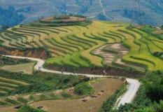 Giacimento a terrazze del riso nel Vietnam del Nord Fotografie Stock Libere da Diritti