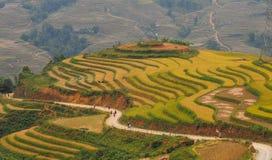 Giacimento a terrazze del riso nel Vietnam del Nord Fotografia Stock Libera da Diritti