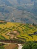 Giacimento a terrazze del riso nel Vietnam del Nord Immagini Stock Libere da Diritti