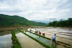 Giacimento a terrazze del riso nella stagione dell'acqua, con gli agricoltori che lavorano al campo in Y Ty, provincia di Lao Cai Fotografie Stock Libere da Diritti