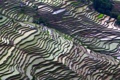 Giacimento a terrazze del riso nella stagione dell'acqua in Yuanyang, Cina Immagini Stock Libere da Diritti