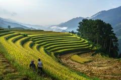 Giacimento a terrazze del riso nella stagione del raccolto con gli agricoltori che raccolgono sul campo in MU Cang Chai, Vietnam Immagini Stock Libere da Diritti