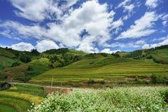 Giacimento a terrazze del riso nella stagione del raccolto con le nuvole ed il cielo blu bianchi in MU Cang Chai, Vietnam Fotografia Stock Libera da Diritti