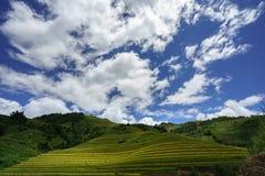 Giacimento a terrazze del riso nella stagione del raccolto con le nuvole ed il cielo blu bianchi in MU Cang Chai, Vietnam Fotografie Stock Libere da Diritti