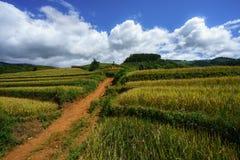 Giacimento a terrazze del riso nella stagione del raccolto con le nuvole ed il cielo blu bianchi in MU Cang Chai, Vietnam Fotografia Stock