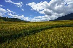 Giacimento a terrazze del riso nella stagione del raccolto con le nuvole ed il cielo blu bianchi in MU Cang Chai, Vietnam Immagine Stock Libera da Diritti