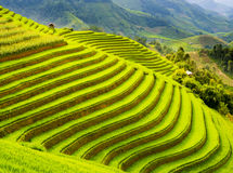 Giacimento a terrazze del riso nelle montagne della MU Cang Chai, Vietnam Immagine Stock Libera da Diritti