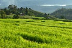 Giacimento a terrazze del riso sulla montagna, villaggio di PA Pong Piang, Chiang m. Fotografie Stock