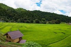 Giacimento a terrazze del riso sulla montagna, villaggio di PA Pong Piang, Chiang m. Immagini Stock