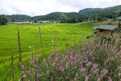 Giacimento a terrazze del riso sulla montagna, villaggio di PA Pong Piang, Chiang m. Fotografia Stock Libera da Diritti