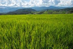 Giacimento a terrazze del riso sulla montagna, villaggio di PA Pong Piang, Chiang m. Fotografia Stock