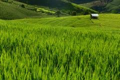 Giacimento a terrazze del riso sulla montagna, villaggio di PA Pong Piang, Chiang m. Fotografie Stock Libere da Diritti