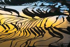 Giacimento a terrazze del riso (Yuanyang Hani) Immagine Stock