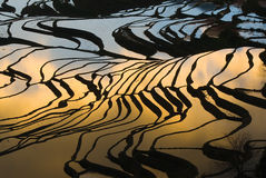 Giacimento a terrazze del riso (Yuanyang Hani) Fotografie Stock