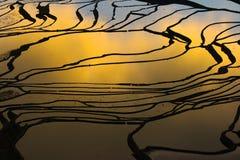Giacimento a terrazze del riso (Yuanyang Hani) Immagine Stock Libera da Diritti