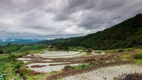 Giacimento a terrazze verde del riso Fotografia Stock