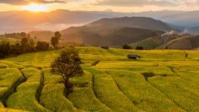 Giacimento a terrazze verde del riso Immagine Stock Libera da Diritti