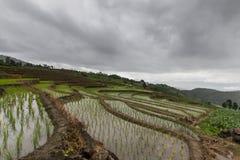 Giacimento a terrazze verde del riso Immagini Stock