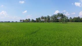 Giacimento verde del riso in centrale della Tailandia Fotografia Stock Libera da Diritti