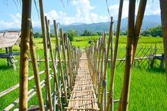 Giacimento verde del riso con il ponte di legno tailandese fotografia stock libera da diritti