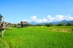 Giacimento verde del riso con la capanna di legno tailandese fotografie stock