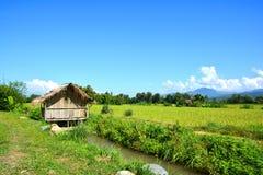 Giacimento verde del riso con la capanna di legno tradizionale tailandese immagine stock libera da diritti