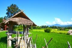 Giacimento verde del riso con la capanna tailandese fotografie stock